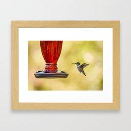 Hummingbird floating on golden air Framed Art Print