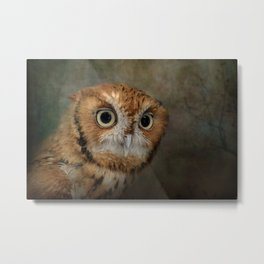 Portrait of An Eastern Screech Owl Metal Print