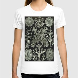 Naturalist Lichen T-shirt