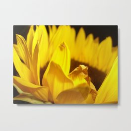 Wilted Perfection Metal Print