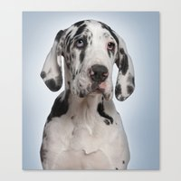 great dane Canvas Prints featuring Great dane by Life on White Creative