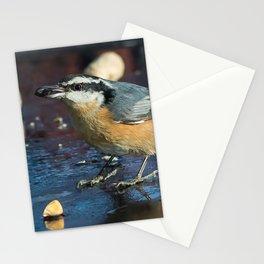December Nuthatch Stationery Cards