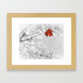 Red in the Snow Framed Art Print