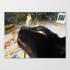 Bebe Kitty Canvas Print