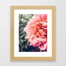 Sunset Peony Framed Art Print
