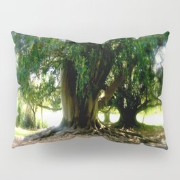 Ancient Trees Pillow Sham