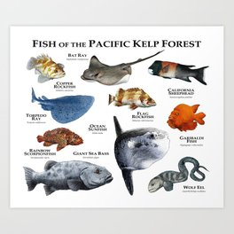 Fish of the Pacific Kelp Forest Art Print