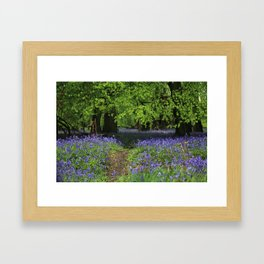 bluebell forest,england Framed Art Print