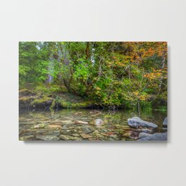 Morning in the Hoh Rain Forest 2 Metal Print
