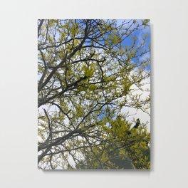 Fine Day Trees Metal Print