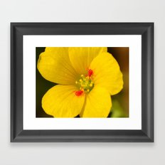 Wildflower with clover mites Framed Art Print