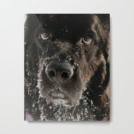 Newfoundland Snowy Bear Metal Print