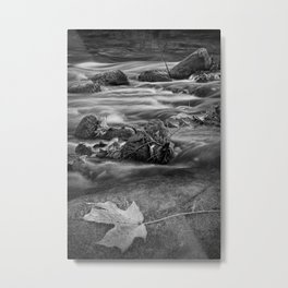 Black and White Autumn Leaf on a Rock by the Flowing Thornapple River Metal Print