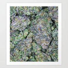 Dedicated Medicator pt.2 (Purple strain) Art Print