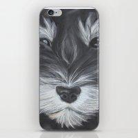 schnauzer iPhone & iPod Skins featuring Schnauzer by Christina Zoernig
