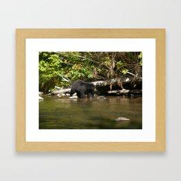 The Salmon Whisperer - A Hunting Black Bear Framed Art Print