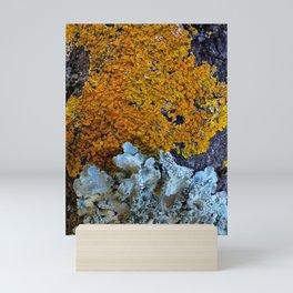 Tree Bark Pattern # 6 with Orange and Blue Lichen Mini Art Print