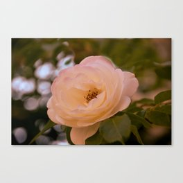 Romance in the Evening Canvas Print