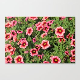 Red Pink Flowers Canvas Print