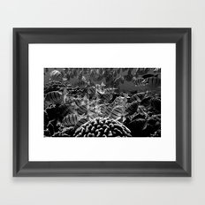 Tropical Fishes Framed Art Print