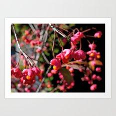 Pink and Orange October Fruits Art Print
