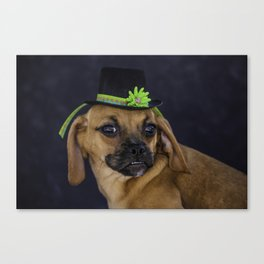 Puggle Puppy Wearing a Green Banded St. Patrick's Day Hat Canvas Print