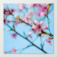 Pink on Blue Canvas Print