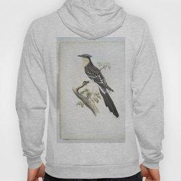 193 Oxylophus glandarius. Great Spotted Cuckoo Hoody