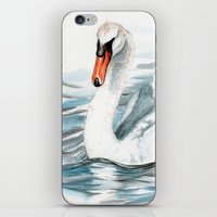 swan iPhone & iPod Skins featuring Swan by rchaem