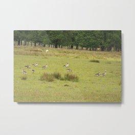 Flock Of Ducks Metal Print