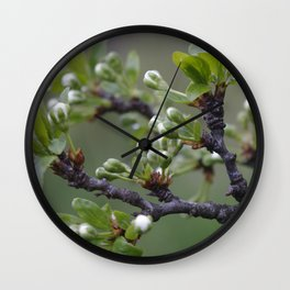 Plum tree flower buds 1 Wall Clock
