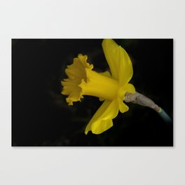 blossoms on black background -03- Canvas Print