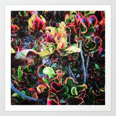 Fun Foliage Art Print