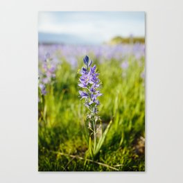 Camas Flower Canvas Print