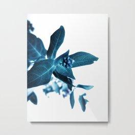 Foxb Metal Print