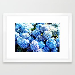 Blue flowers all summer  Framed Art Print