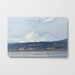 Mt Shasta and Waterfowl Metal Print
