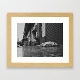 Palermo, Ballarò sleeping dog Framed Art Print