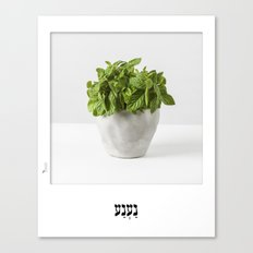 Mint herb planter poster for the kitchen with hebrew name Canvas Print