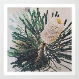 Banksia Flower Art Print