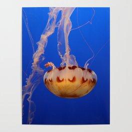 Medusa Jelly Poster