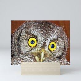 Baby screech owl Mini Art Print
