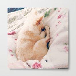 Nesting Puppy Metal Print