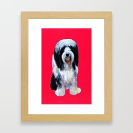 Bearded collie on cerise Framed Art Print