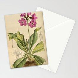 Primula sinopurpurea 1918 Stationery Cards