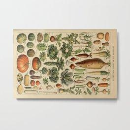 legume et plante potageres Metal Print