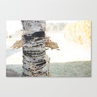 birch Canvas Prints featuring birch by Rae Snyder