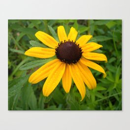 Soaked with Sunshine Canvas Print