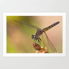 Summer Visitor Art Print
