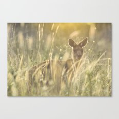 Sneaky Kangaroo in the Evening Sunset Canvas Print